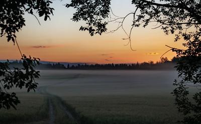 Туман на рассвете раннее утро туман поле