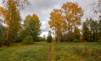 В осеннем парке. парк осень тропинка деревья тополь