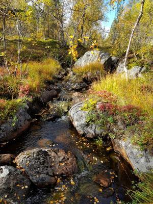 А за городом уже осень Кольский полуостров Лапландия осень