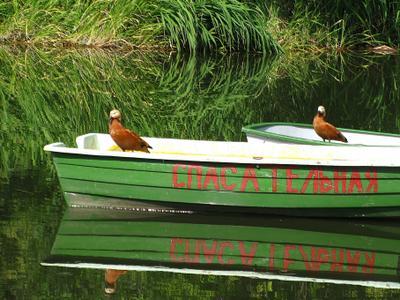 """""""Спасатели"""" спешат на помощь лодки огарь утки"""