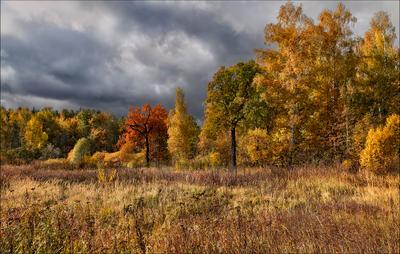 Осенний свет Деревья Свет Осень