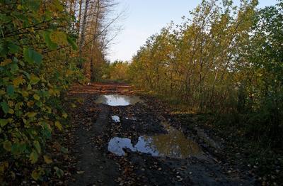 После дождя сентябрь лес дорога лужи