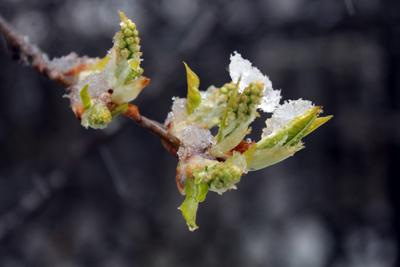 Однажды в мае мир труд май снег