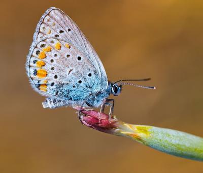Очень маленькая бабочка...