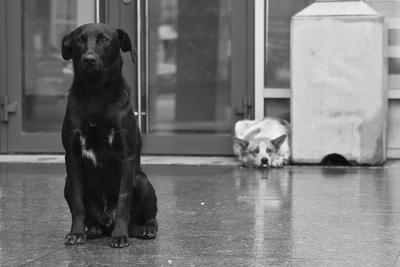 Обида Животные собака