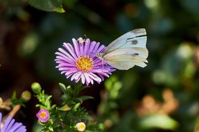 Бабочка на цветке бабочка цветы сады насекомые природа лето