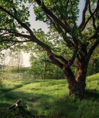 Весна дуб озеро дерево трава весна