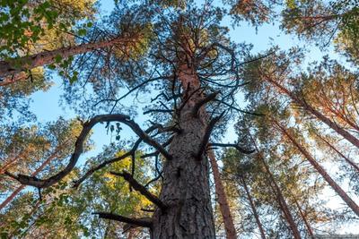 Цепляясь ветками за воздух лес деревья Рязанская обл