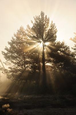 Продираясь скозь ветви рассвет туман лучи деревья