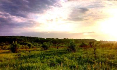 Paradise природа