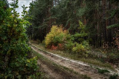 *** осень пейзаж лес