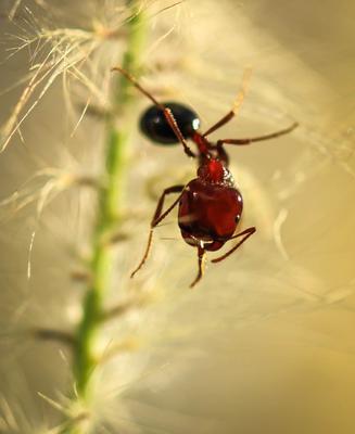 Утренняя йога муравей травинка утро йога