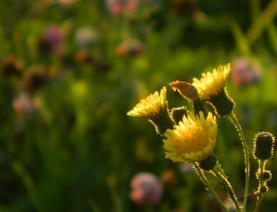 В жёлтых лучах заходящего солнца солнечный свет на закате