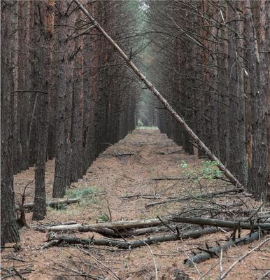 Лес... Лес осень прогулка воздух сосна тропа структура природа посадка