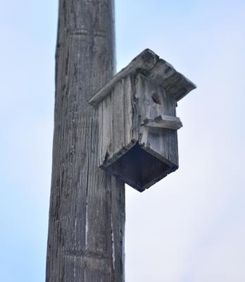 Скворечник скворечник дерево птицы ясинский