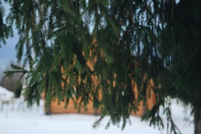 Ёлочка зима деревня природа елки winter village nature trees