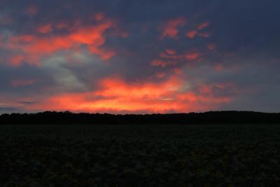 *** закат поле