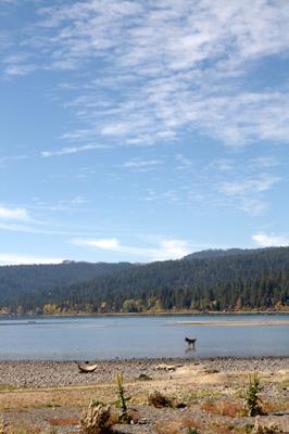 Собака на Тахо USA California Tahoe Lake