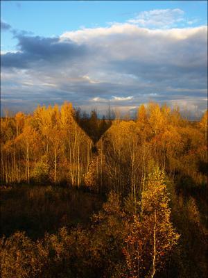 воздушный шар тень лес осень воздушный шар
