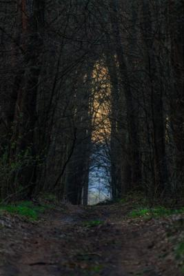 Лесной портал утро лес дорога портал