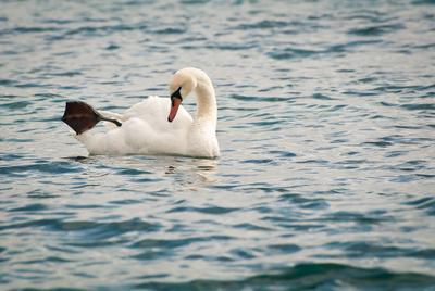 Зарядка Лебедь, море