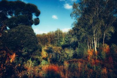 Приближаясь к равноденствию осень сентябрь лес