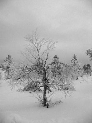 Царство Снежной Королевы снег мороз лес дерево