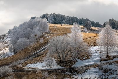 Серебристый иней Ставропольский край Ставрополье холм март весна иней деревья парк Кисловодский национальный Малое Седло холмистый берёза дерево в инеи Кисловодск