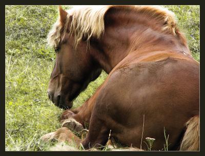 Ну вот и утренние заморозки... природа, животные, лошади