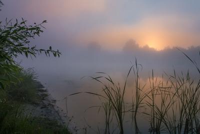 Нежное утро в прохладном тумане природа туман утро река рассвет