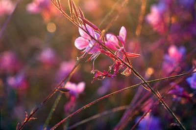 *** цветы на закате солнца