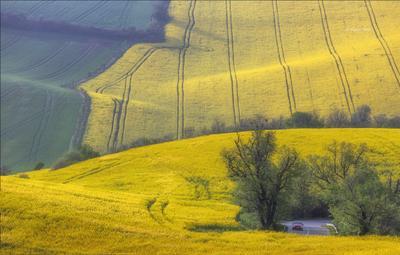 Моравские переливы южная моравия пейзаж рапс линии south moravian lines свет czech весна чехия landscapes