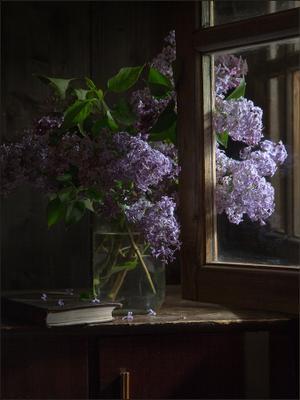 Сирень у окна дача весна сирень окно