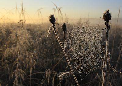 Свет и паутинка