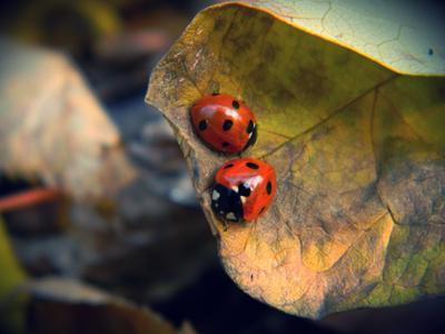 Ladybirds Макро жук листья красный бабочка-коробочка