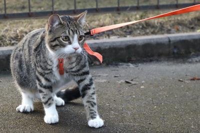 не хочу гулять кот кошки кошка шлейка прогулка