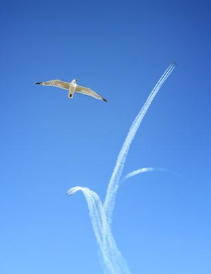 *** самолет чайка небо шоу