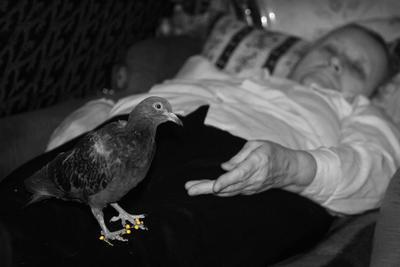 Летела.. Спешила.. Устала.. Но.. опоздала... инвалиды мама голубка