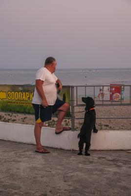 Ожидание собака мужчина море