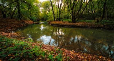 Речка. парк речка осень вода вечер