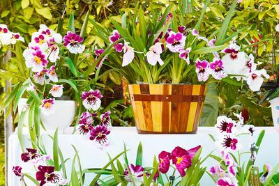 Радостное утро цветы