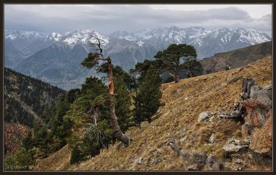 Говорящие с ветром... Кавказ, КЧР, горы, осень, сосны