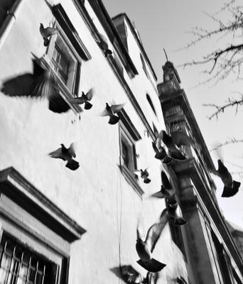 Голуби старого города голуби