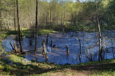Весеннее болотце весна болото