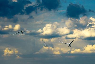 ***Полет с юга море птицы чайки полёт облака юг улетают