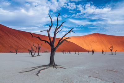 Когда уходит вода... Sossusvlei africa dead deadvlei desert dune namibia red sand tree