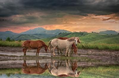 На просторах Алтая на просторах Алтая красивые места кони