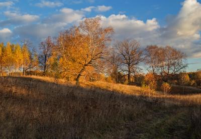 Золото осени природа пейзаж осень татарстан урняк