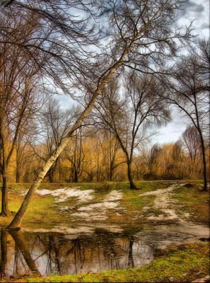 весна идет природа  весна  tikhon