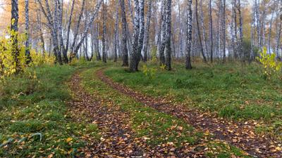 *** Осень октябрь пейзаж 2017